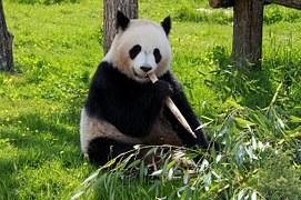 panda-206297__180